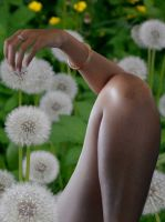dandelion-flower_vvjetovi-maslacka