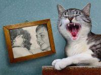 when-the-cat-grins_kad-se-macka-smije